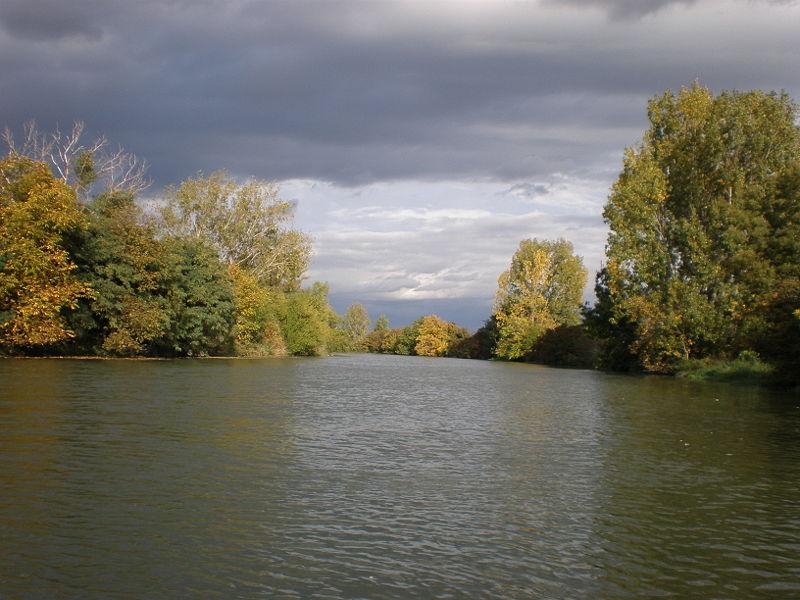 Európa második legnagyobb úszólápja a Kis Dunán