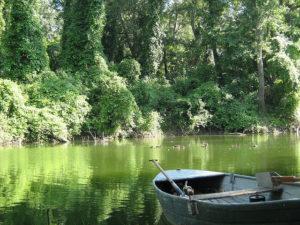 Kis Duna horgászat