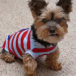 Kutya kiegészítők rendelésével feldobhatod a kutyád mindennapjait