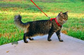 Biztonságot nyújt a macskahám